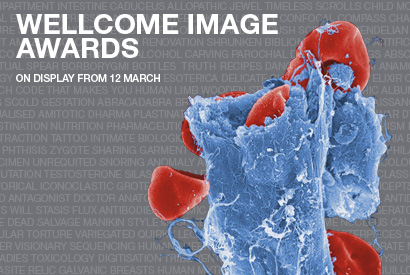 Wellcome Image Awards