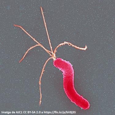 """Seminari de recerca: """"Epidemiología de la tos ferina a partir de sus estudios en diversos niveles asistenciales"""""""